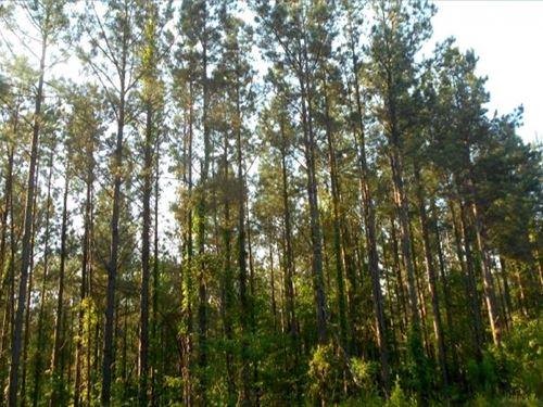 111.55 Acres In Yalobusha County : Tillatoba : Yalobusha County : Mississippi