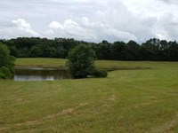 102.5 Acres, Perfect For Hunt : Bolivar : Hardeman County : Tennessee