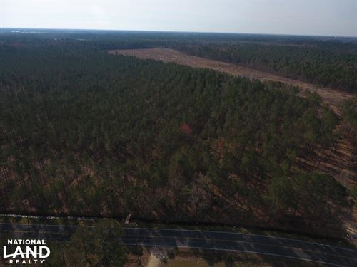 Dawson's Station Timber Tract : Kinston : Lenoir County : North Carolina