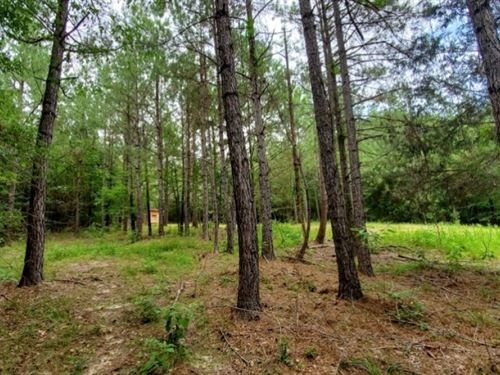 40 Acres In Simpson County In Mende : Mendenhall : Simpson County : Mississippi