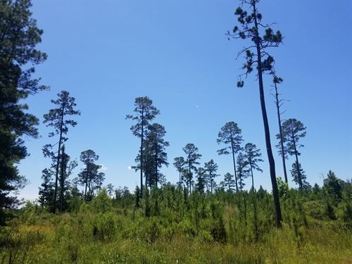 50 Acres Timberland Ashley County : Crossett : Ashley County : Arkansas