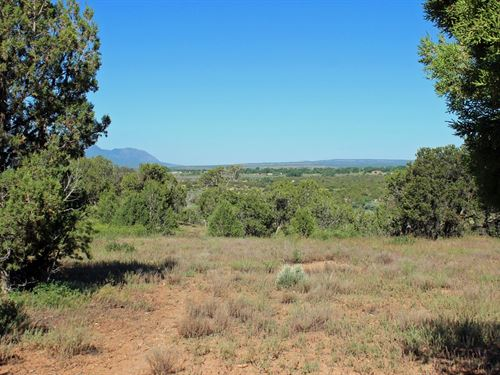 Perfect Rural Colorado Land : Cortez : Montezuma County : Colorado