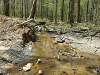Hackney Creek Headwaters : Goodwater : Tallapoosa County : Alabama