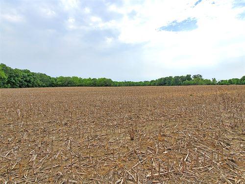 Champaign County Century Farm : Urbana : Champaign County : Ohio