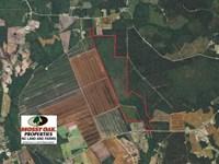 460 Acres of Timber Land For Sale : Nakina : Columbus County : North Carolina