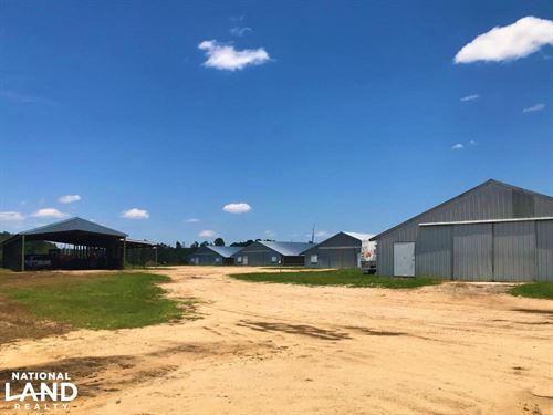Orangeburg Six House Chicken Farm : Orangeburg : South Carolina