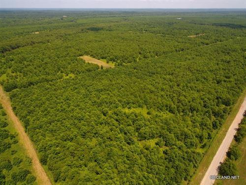 204 Ac, Wrp Deer & Duck Huntin : Bossier City : Bossier Parish : Louisiana