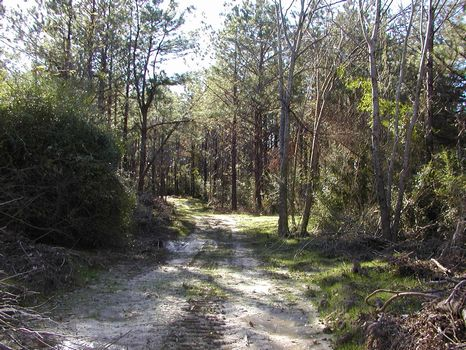 47 Acres +/- : Ellisville : Jones County : Mississippi