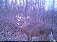 Monroe County, OH Hunting Land : Woodsfield : Monroe County : Ohio