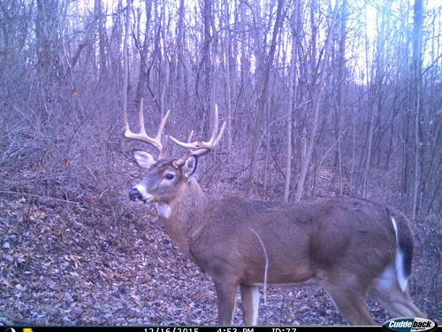 Monroe County, OH Hunting Land : Woodsfield : Monroe County : Ohio
