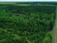 Mature Timber Big Creek : Sandersville : Washington County : Georgia