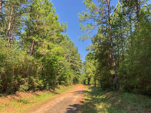 31 Acres Joskey Estates 281621 : Zavalla : Angelina County : Texas