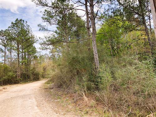 11 Acres Cr 3132 : Orange : Newton County : Texas