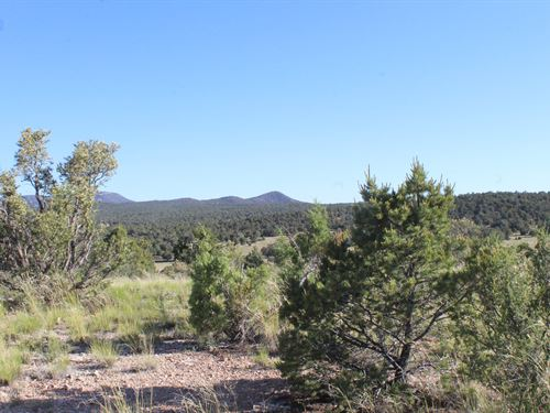 Land That Borders Public Land : Seligman : Yavapai County : Arizona