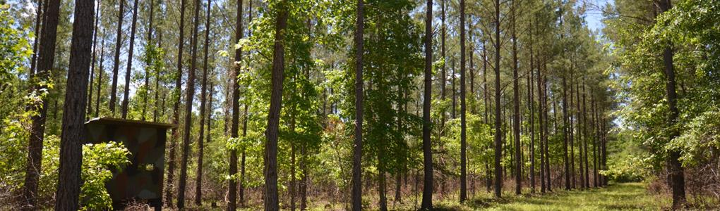 275+/- Acres Prime Hunting Land : Oak Bowery : Chambers County : Alabama