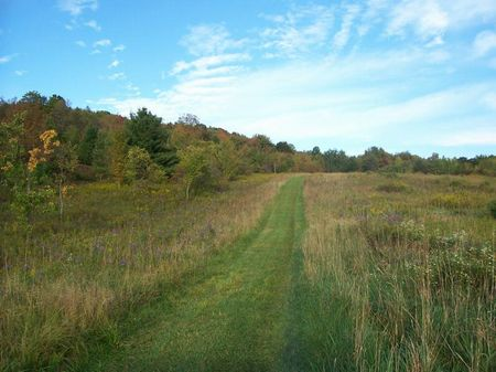 31 Acres Woods Near Ny State Forest : Harford : Cortland County : New York