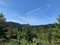 237 Acres in Curtin, OR : Curtin : Douglas County : Oregon