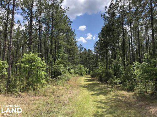 Gillison Branch Hunting / Farming : Ridgeland : Jasper County : South Carolina