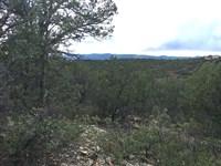 Wooded Lot Tijeras Canyon : Tijeras : Bernalillo County : New Mexico