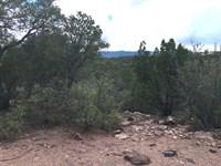 Central NM Wooded Acreage Tijeras : Tijeras : Bernalillo County : New Mexico