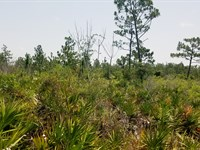 River Ranch Land, 5 Acres : Frostproof : Polk County : Florida