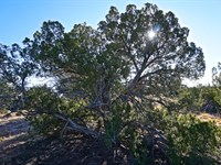 Cheap Arizona Land Sale : Saint Johns : Apache County : Arizona