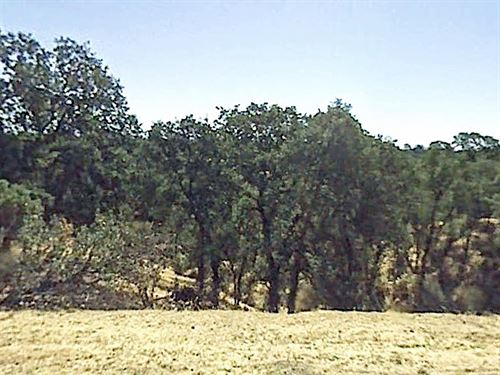 .3 Acre Lot Near Cottonwood : Cottonwood : Tehama County : California
