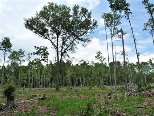 Barton Tract : Barton : Allendale County : South Carolina