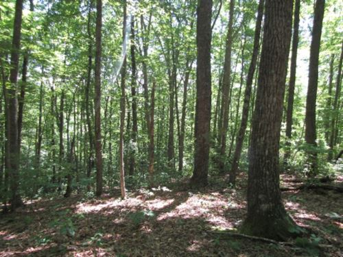 6+Ac Totally Wooded, Great Location : Jamestown : Fentress County : Tennessee