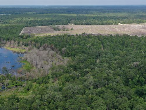 Dunns Creek Hunting Land : Satsuma : Putnam County : Florida