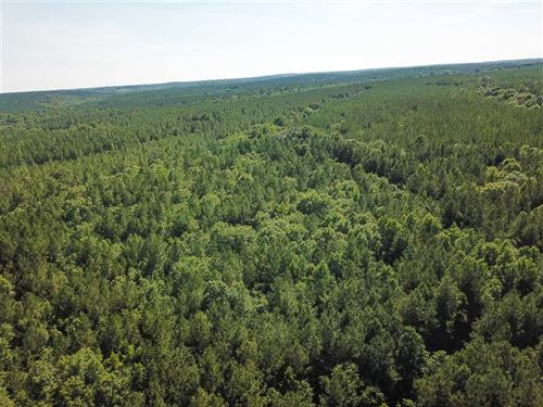80 Acre Tract Near Baker Hill, AL : Eufaula : Barbour County : Alabama