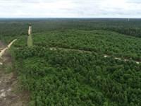 Land Chidester, AR Home Site : Chidester : Ouachita County : Arkansas