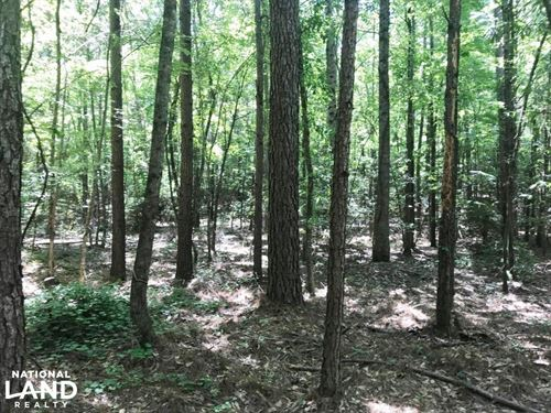 Davis Creek Hunting & Timber Invest : Fayette : Alabama