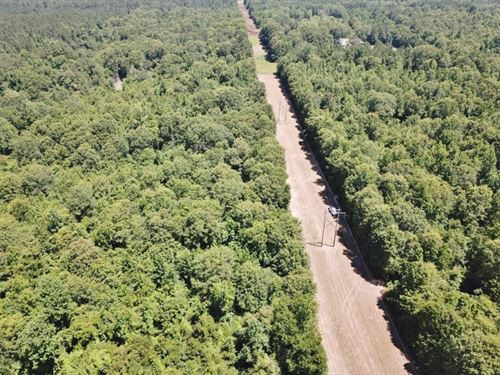 40 Acre Small Hunting Tract Near LA : Osyka : Pike County : Mississippi