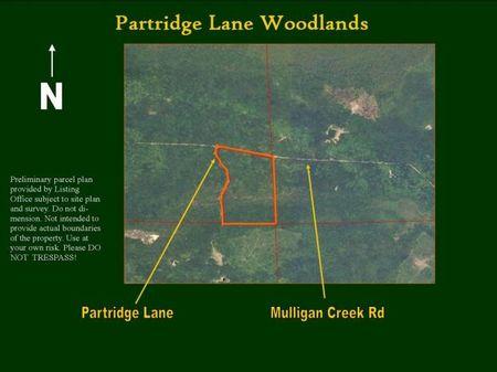 Mulligan Creek : Cheboygan County : Michigan