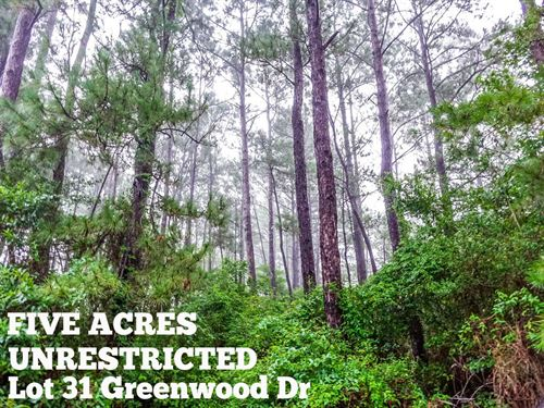 5 Acres In Montgomery County : Cleveland : Montgomery County : Texas