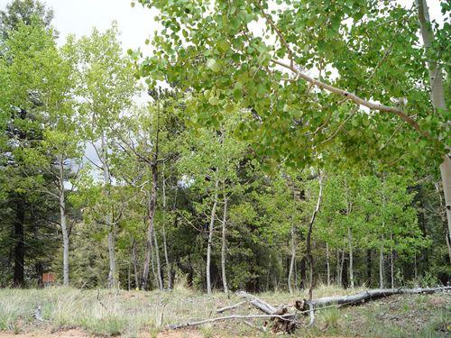 1.57 Acres Vacant Land Cripple : Cripple Creek : Teller County : Colorado