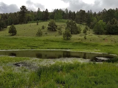 Acreage With A Pond : Cripple Creek : Teller County : Colorado