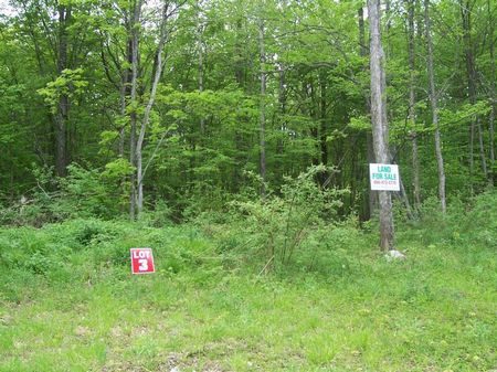 Wooded Hunting Land Borders Forest : Plymouth : Chenango County : New York