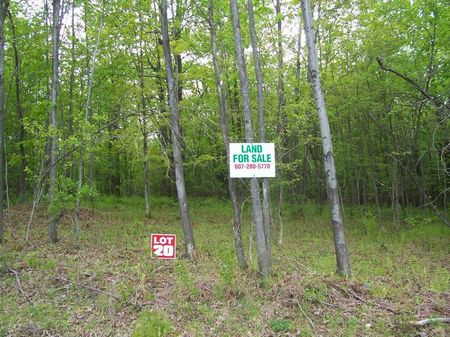 Wooded Lot Build Your Hunting Camp : Plymouth : Chenango County : New York