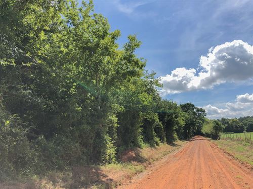 33 Acres Cr 1410 C : Jacksonville : Cherokee County : Texas