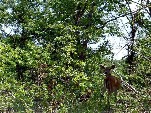 Secluded Wooded Land Close To Lake : Coffman Bend : Camden County : Missouri