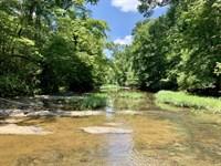 Elite Turkey Hunting / Timber Tract : Jemison : Chilton County : Alabama