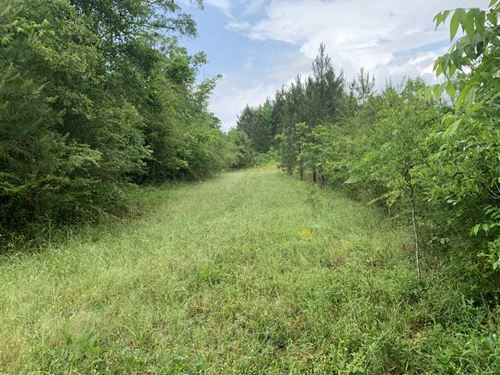 25 Acres of Recreational Timbe : Fosters : Tuscaloosa County : Alabama