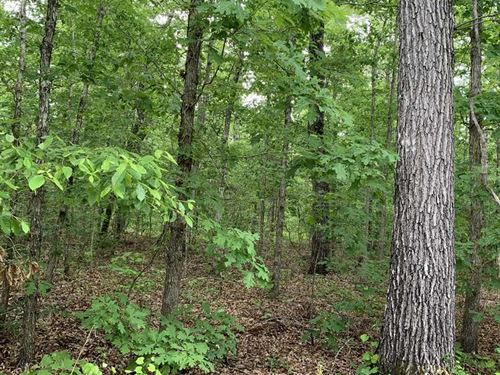 33 Acres of Recreational-Timbe : Fosters : Tuscaloosa County : Alabama