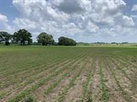 Wilson Farm : Marion Junction : Dallas County : Alabama