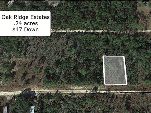 Rare .24 Acre Exclusive Lot : Williston : Levy County : Florida