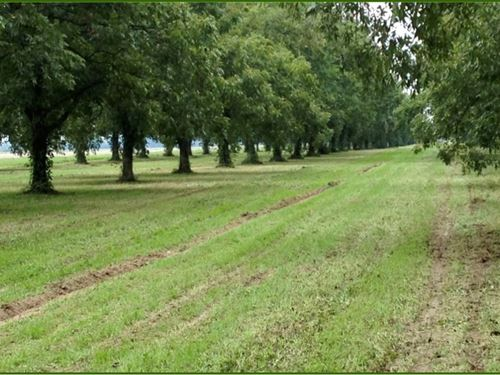62.4928 Acres In Bolivar County : Cleveland : Bolivar County : Mississippi