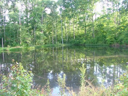 56.2 Ac Timber Pond Hunt Build : Russellville : Franklin County : Alabama
