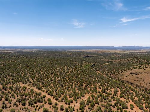 Wooded Lot Next To 640 Acre Blm : Williams : Coconino County : Arizona